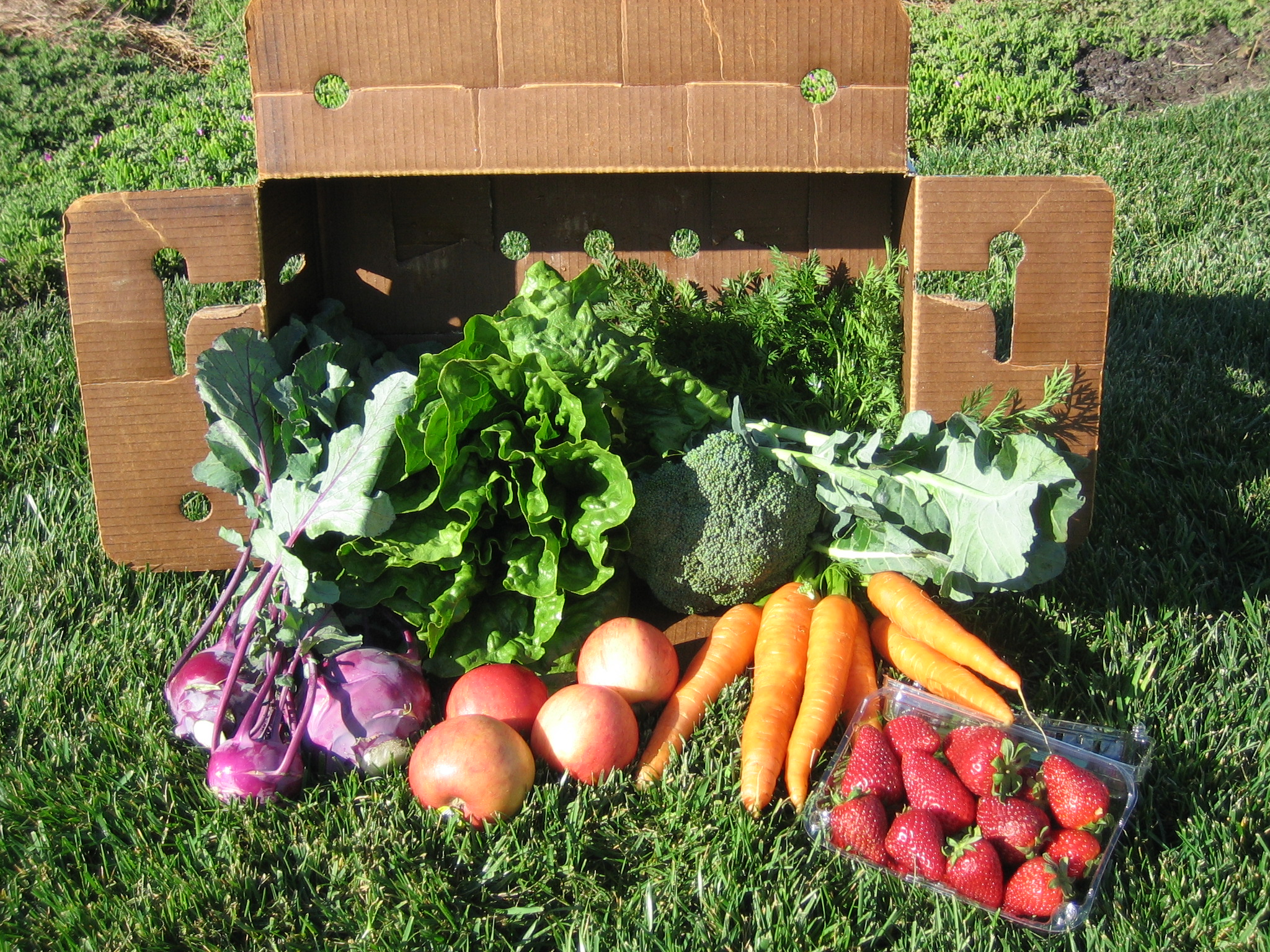 Join a Community Supported Agriculture (CSA) program for the upcoming season!