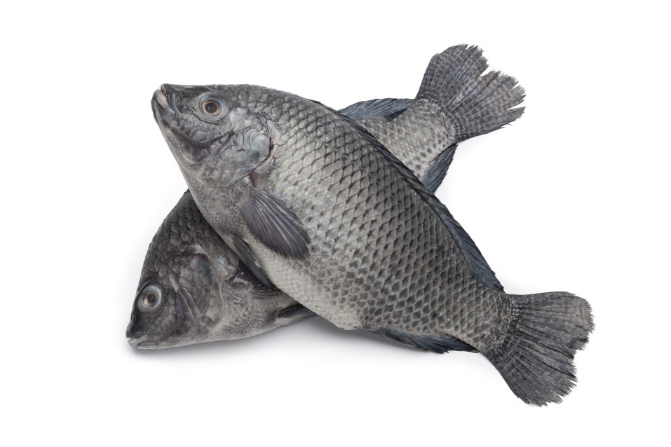Tilapia Is As Bad For You as Bacon!